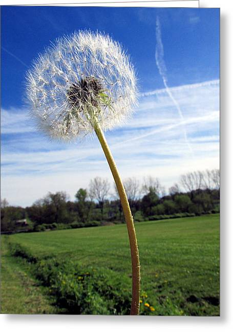 Wishes Or Weeds Greeting Card by Andrea Dale