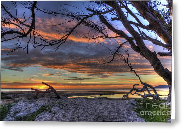 Wishing Branch Sunset Greeting Card