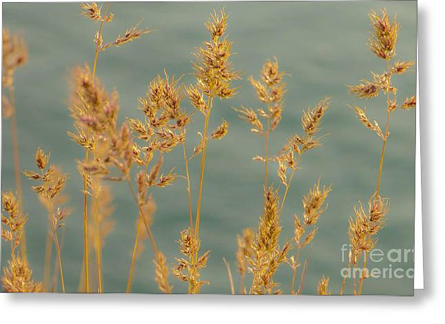 Wispy Grass Greeting Card by Sarah Crites