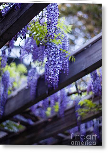 Wisteria Beams Greeting Card by Mike Reid