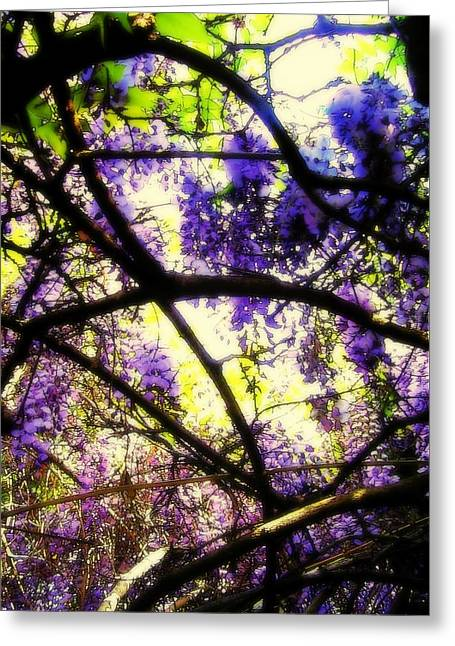 Wisteria Branches Greeting Card
