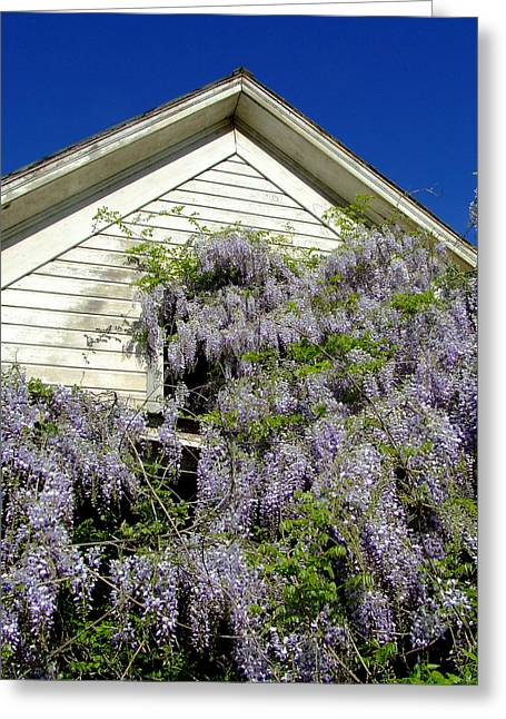 Wisteria Cascading Greeting Card by Everett Bowers