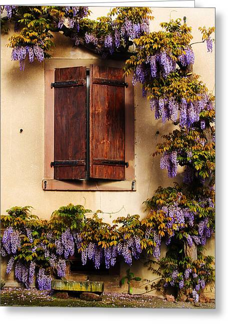 Wisteria Encircling Shutters In Riquewihr France Greeting Card by Greg Matchick