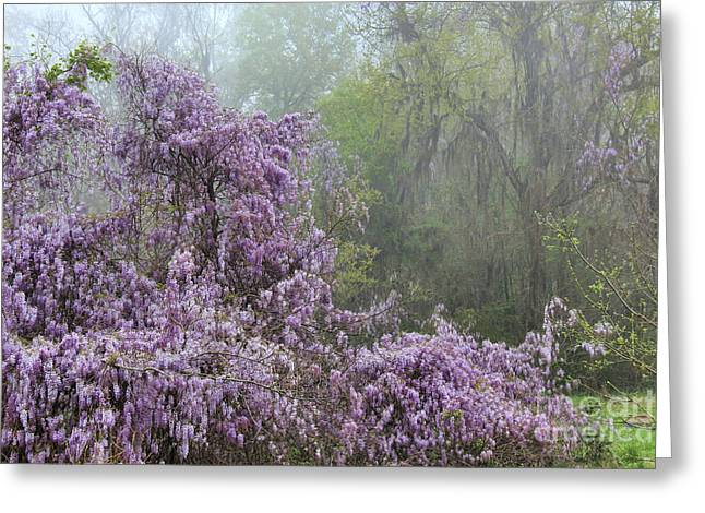Wisteria In The Mist Greeting Card by Leslie Kirk