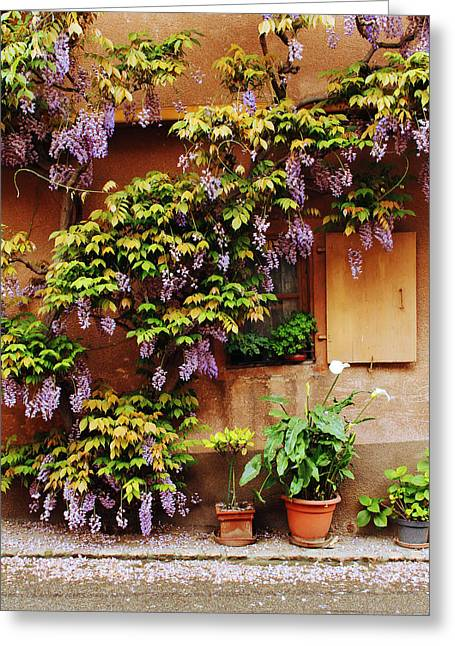 Wisteria On Home In Zellenberg 4 Greeting Card