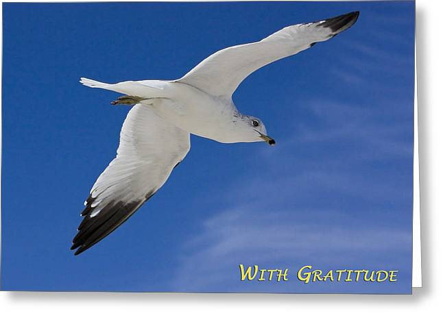With Gratitude Greeting Card by Dawn Currie