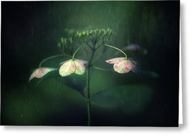 Withe Hydrangea Greeting Card by Takashi Suzuki