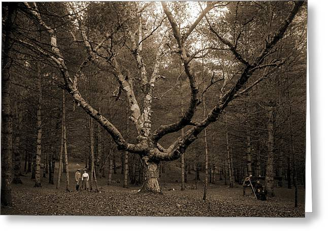 Wizard Tree, Cathedral Woods, North Conway, White Greeting Card by Litz Collection