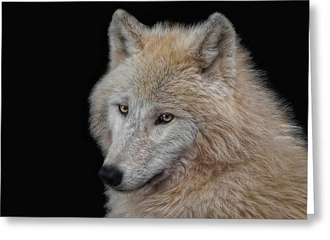Wolf Bride Greeting Card by Joachim G Pinkawa