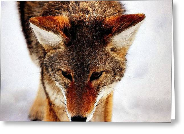 Wolf In The Wild Greeting Card by Florian Rodarte