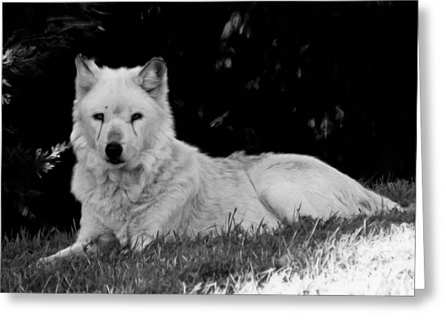 Wolf In The Zoo Greeting Card by Victoria Sheldon