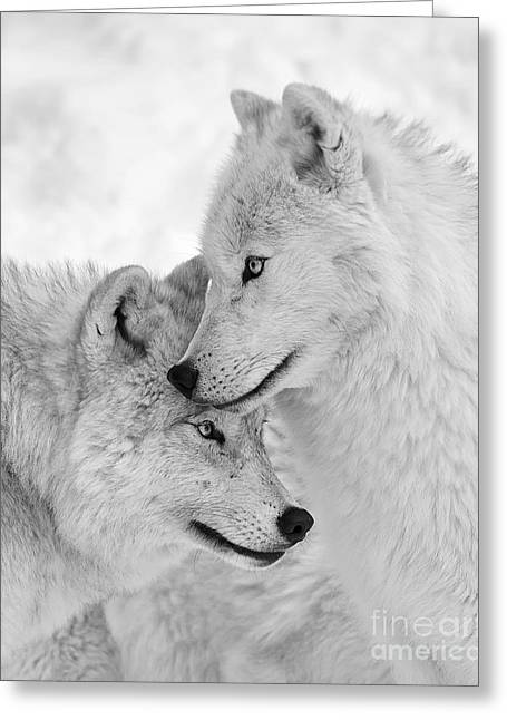 Wolf Love Black And White Greeting Card