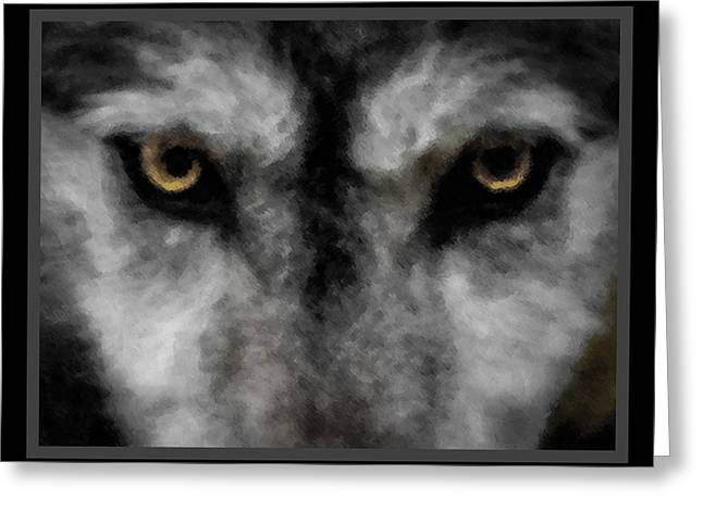 Wolf Stare Greeting Card