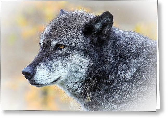 Wolf Greeting Card by Steve McKinzie