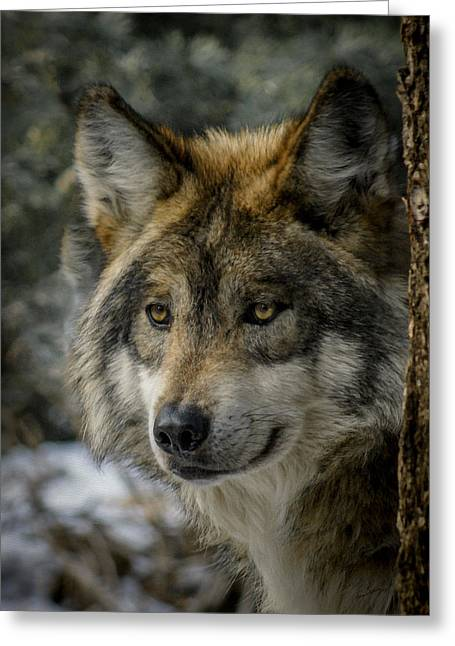 Wolf Upclose 2 Greeting Card