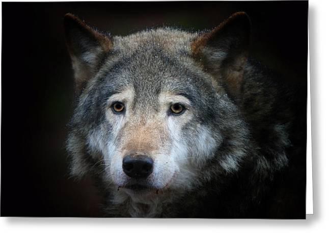 Wolf Greeting Card by Vladimir Meshkov