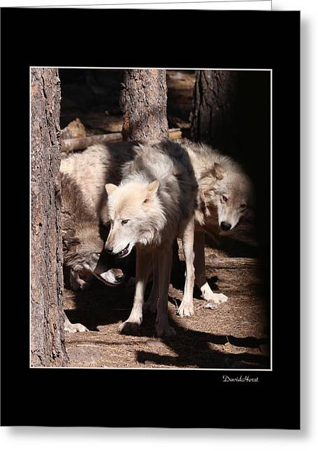 Wolfpack Greeting Card by David Horst