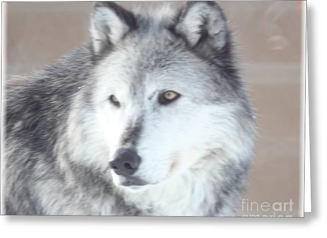 Wolve 1 Greeting Card by Brenda Henley