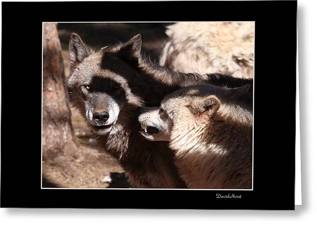 Wolves Greeting Card by David Horst
