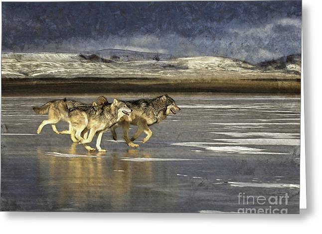 Wolves - Frozen Tundra Greeting Card by Wildlife Fine Art
