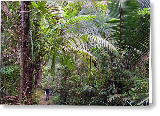 Woman In Rainforest, Unesco Biosphere Greeting Card by Howie Garber