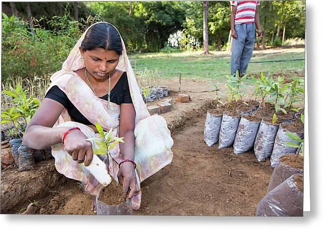 Woman Planting Trees Greeting Card