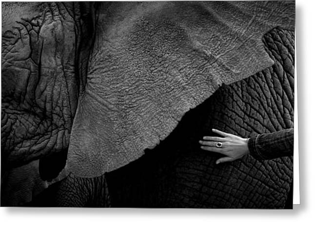 Woman Touching An Elephant Greeting Card