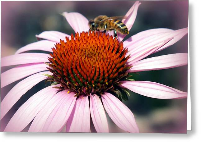 Wonder Of Pollen Greeting Card by Karen Wiles