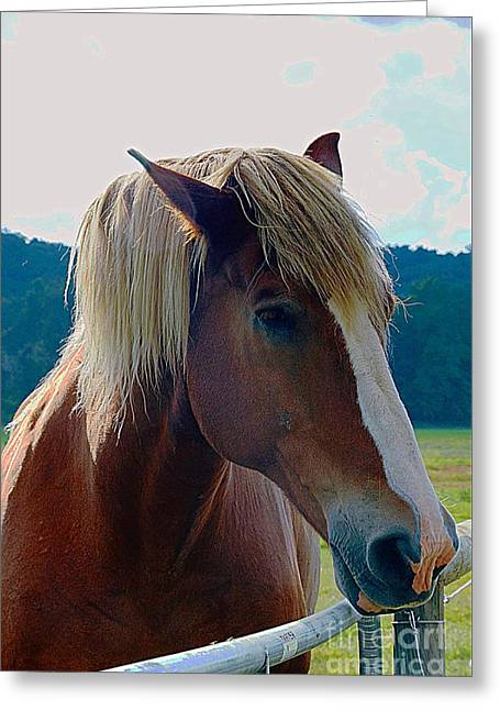 Wonderful Horse Greeting Card