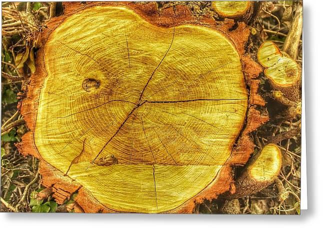 Wood Greeting Card by Daniel Precht