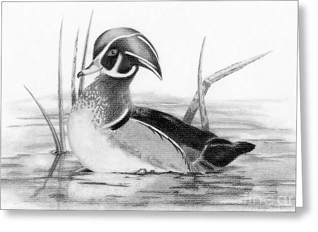 Wood Duck In Pond Greeting Card
