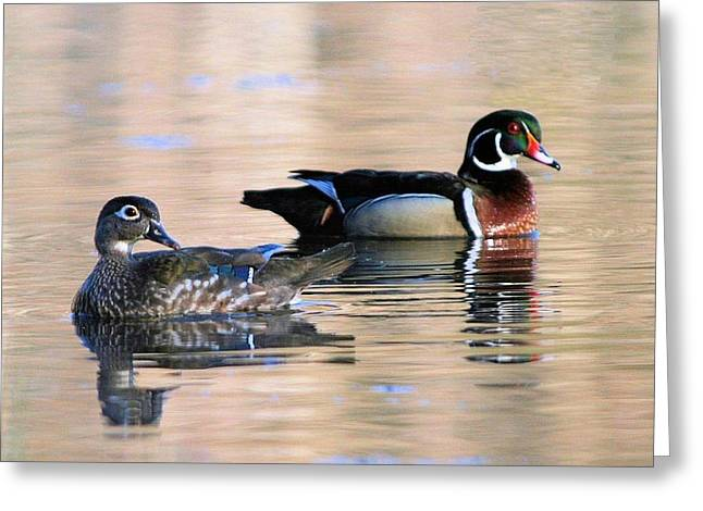 Wood Duck Pair In Kettles Greeting Card