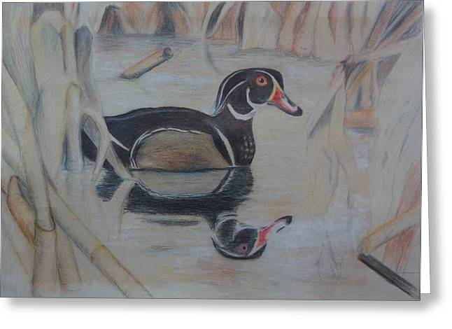 Wood Duck Greeting Card by Peggy Clark