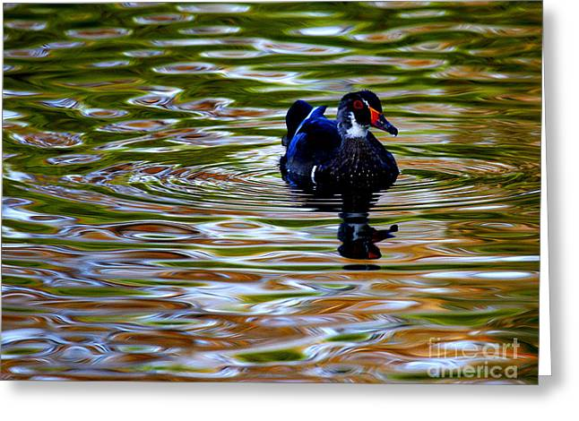 Greeting Card featuring the photograph Wood Duck Reflections by John F Tsumas