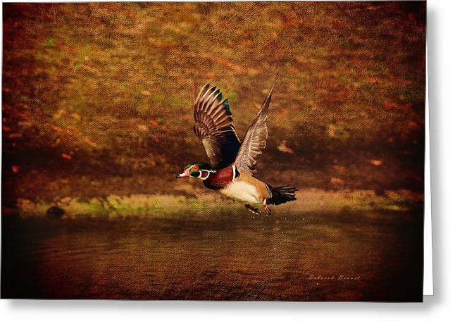 Wood Duck Taking Off Greeting Card by Deborah Benoit