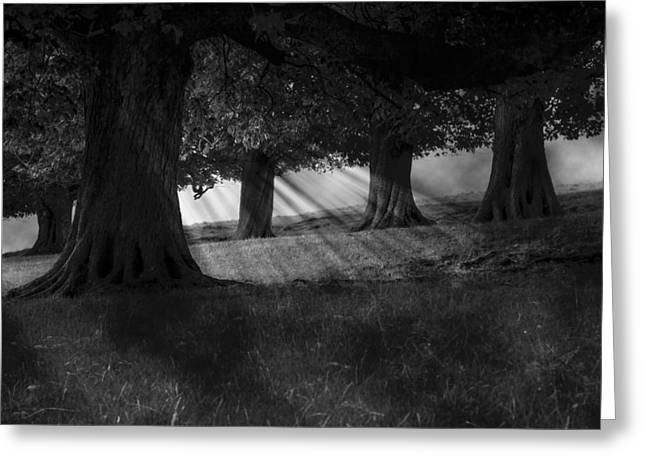 Greeting Card featuring the photograph Wood I Dream by Stewart Scott