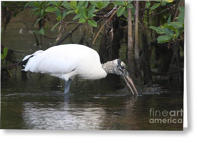 Wood Stork In The Swamp Greeting Card by Christiane Schulze Art And Photography