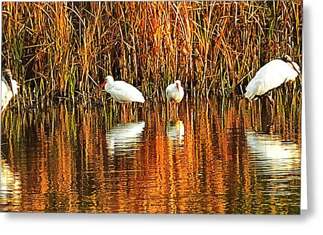 Wood Storks And 2 Ibis Greeting Card by Bill Barber