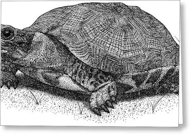 Wood Turtle Greeting Card