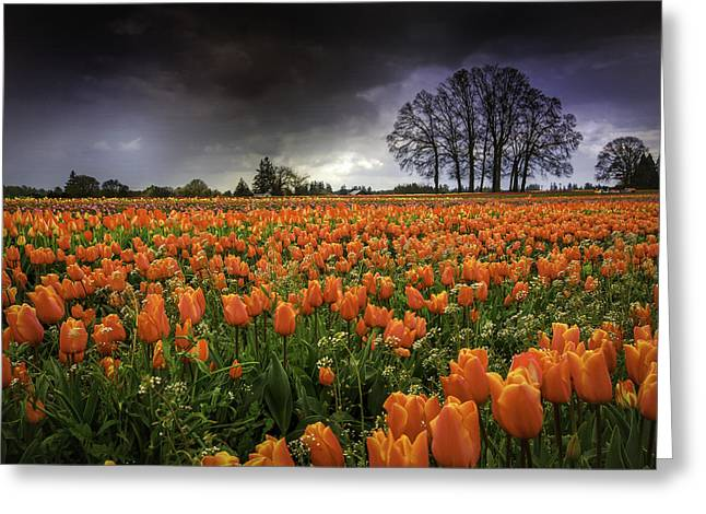 Woodburn Tulip Festival Greeting Card