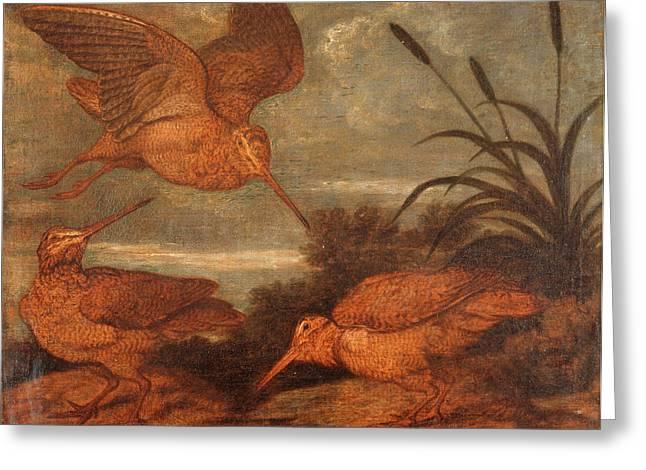 Woodcock At Dusk, Francis Barlow, 1626-1702 Greeting Card