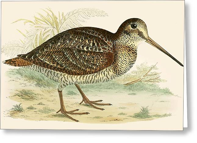 Woodcock Greeting Card by Beverley R Morris