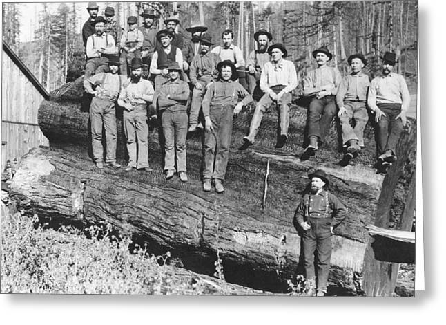 Woodcutters In California, 1891 Bw Photo Greeting Card