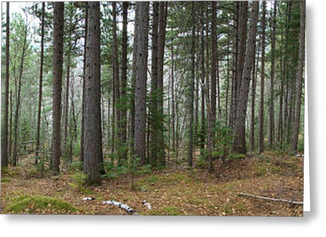 Wooded Panorama In Our Northeast Greeting Card