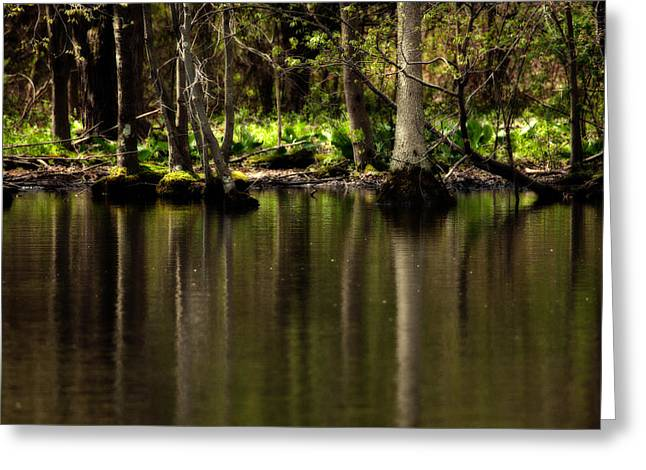 Wooded Reflection Greeting Card by Karol Livote