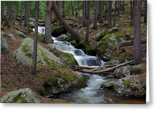 Wooded Stream Greeting Card by Matt Helm