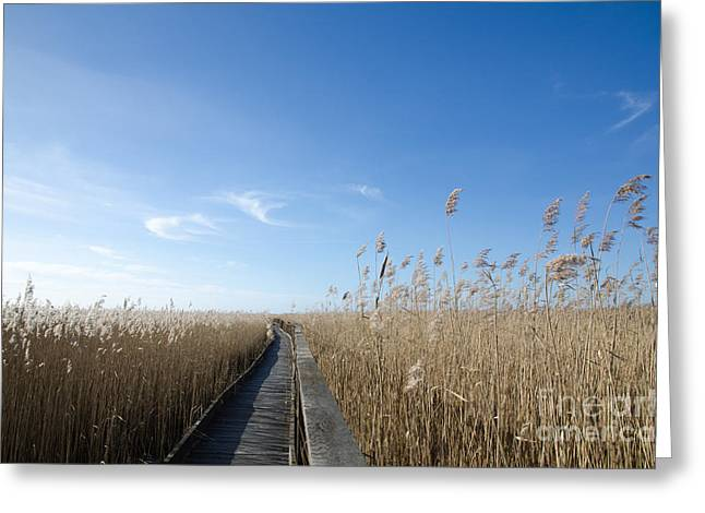 Wooden Footpath In The Reeds Greeting Card by Kennerth and Birgitta Kullman
