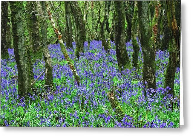 Woodland Bluebells Greeting Card