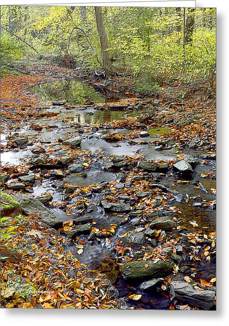 Woodland Brook In Fall Montgomery County Pennsylvania Greeting Card