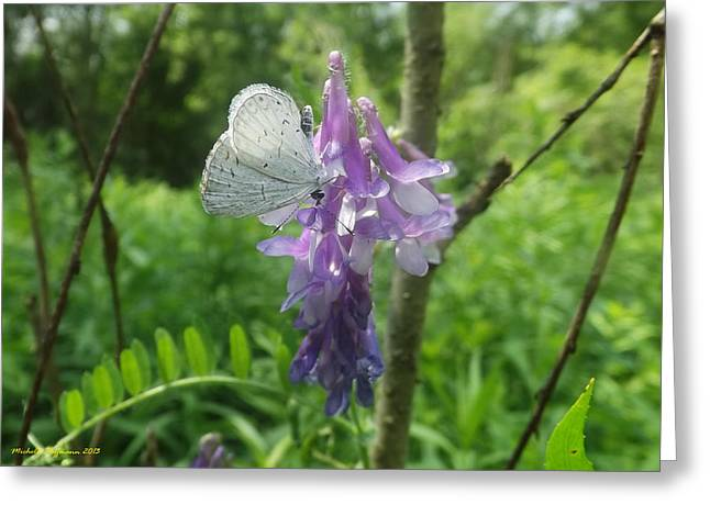 Woodland Butterfly Greeting Card